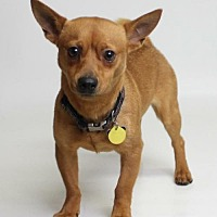Adopt A Pet :: Lucky - Fresno, CA