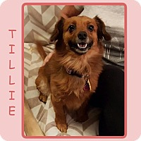Adopt A Pet :: TILLIE - Dallas, NC