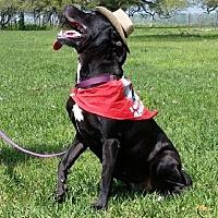 Terrier (Unknown Type, Medium) Mix Dog for adoption in Simsbury, Connecticut - Midnight