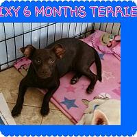 Adopt A Pet :: dixy - temecula, CA