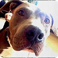 Adopt A Pet :: Phoenix - Bastrop, TX