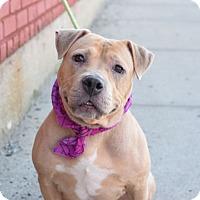 Adopt A Pet :: Cora - Prospect, CT