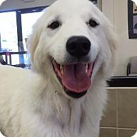Adopt A Pet :: Bella Senorita - Kyle, TX