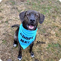 Adopt A Pet :: Myles - Independence, MO