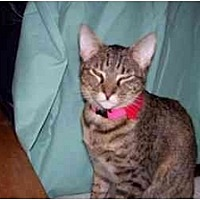 Adopt A Pet :: Tracy - Garland, TX