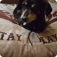 Adopt A Pet :: BOBO - Lubbock, TX