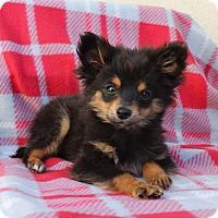 Adopt A Pet :: Chicago - Los Angeles, CA