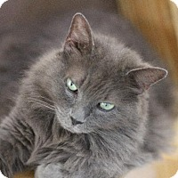 Adopt A Pet :: BLU BLU CAREY - Ocala, FL