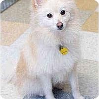 Adopt A Pet :: Cosmo - Portland, OR