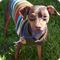 Adopt A Pet :: Sheldon - Sacramento, CA