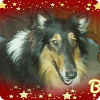 Adopt A Pet :: Beau - Houston, TX
