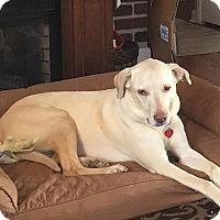 Adopt A Pet :: Shiloh #2 - Buckeystown, MD