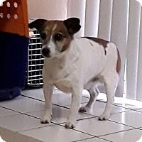 Adopt A Pet :: Texas in Ft. Worth - Austin, TX