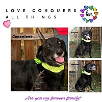 Adopt A Pet :: Genevieve - Columbia, TN