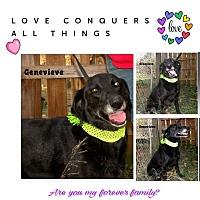 Adopt A Pet :: Genevieve - Columbia, TN