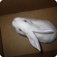 Adopt A Pet :: Magic - Oakland, CA