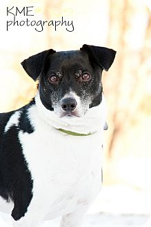 Border Collie/Rat Terrier Mix Dog for adoption in Delano, Minnesota - Manny