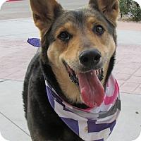 Adopt A Pet :: Cassie - Gilbert, AZ