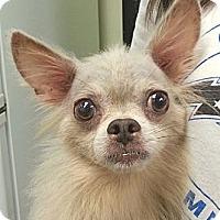 Adopt A Pet :: Stevie - Orlando, FL