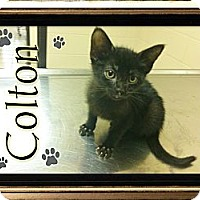 Adopt A Pet :: Colton - Washington, DC