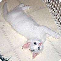Adopt A Pet :: Icing - Richmond, VA