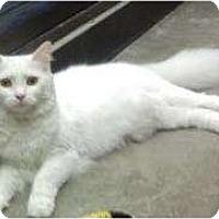 Adopt A Pet :: Gretel - Greenville, SC
