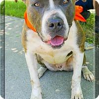 Adopt A Pet :: Taco lover - Sacramento, CA