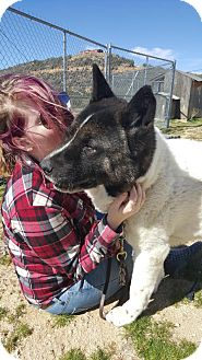 Akita Dog for adoption in Toms River, New Jersey - Marty