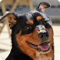 Adopt A Pet :: Frida $20 - Lincolnton, NC