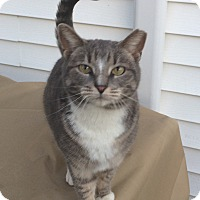 Adopt A Pet :: Sweetie - Staten Island, NY