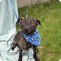 Adopt A Pet :: Donate - Glastonbury, CT