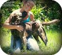 Spitz (Unknown Type, Medium) Mix Dog for adoption in Eustis, Florida - Apollo