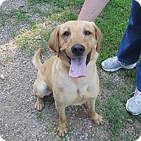 Adopt A Pet :: Midas - Geneseo, IL