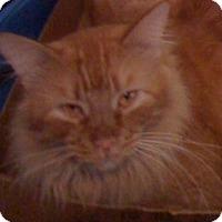 Adopt A Pet :: Duffy - Madisonville, LA