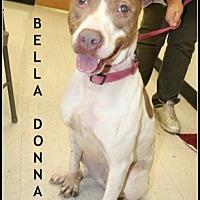 Adopt A Pet :: Bella Donna - Houston, TX