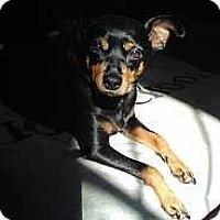 Adopt A Pet :: Lola - Malaga, NJ