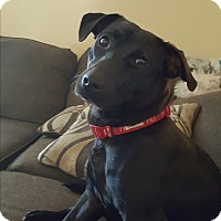 Adopt A Pet :: Tara - Rancho Cucamonga, CA
