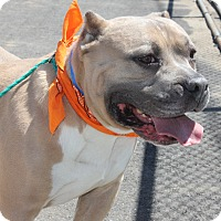 Adopt A Pet :: BORRIS - Clayton, NJ