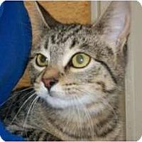 Adopt A Pet :: Raya - Warren, MI