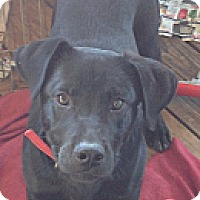 Adopt A Pet :: Buddy - Kaufman, TX