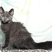 Adopt A Pet :: Franklin - New York, NY