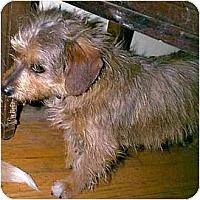 Adopt A Pet :: Heather - dewey, AZ