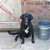 Adopt A Pet :: Jonah - Pensacola, FL