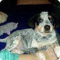 Adopt A Pet :: Baby Emma - Marlton, NJ