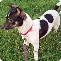 Adopt A Pet :: Mylo - San Francisco, CA