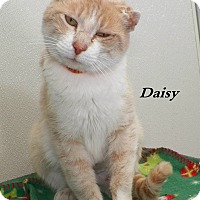Adopt A Pet :: Daisy - Dover, OH