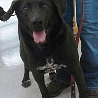 Adopt A Pet :: Pup - Laconia, IN