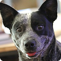 Adopt A Pet :: Rae - in Maine - kennebunkport, ME