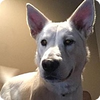 Adopt A Pet :: Jojo - Baltimore, MD