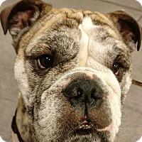 Adopt A Pet :: Kingston - Columbus, OH